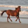 How Long Does A Horse Live