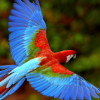 How Long Does A Parrot Live