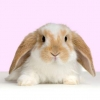 How Long Does a Rabbit Live