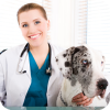 How Long Does It Take To Be A Veterinarian