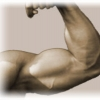 How Long Does It Take To Gain Muscle