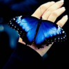 How Long Does A Butterfly Live