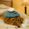 How Long Does Kennel Cough Last