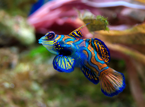 how long does a fish live
