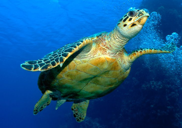 How Long Does A Turtle Live