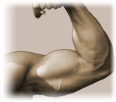 How-Long-Does-It-Take-To-Gain-Muscle