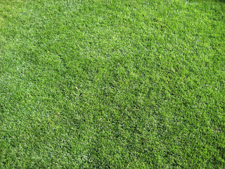 How Long Does It Take To Grow Grass