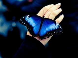 how-long-does-a-butterfly-live-img