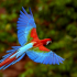 how-long-does-a-parrot-live-img