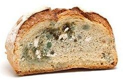 how-long-does-it-take-for-bread-to-mold-img