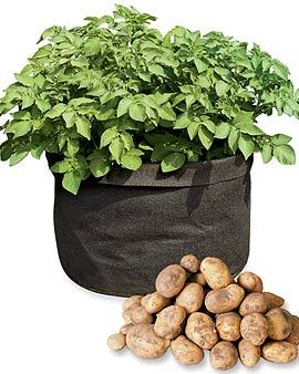 how-long-does-it-take-to-grow-potatoes-img