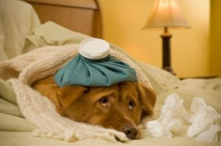 how-long-does-kennel-cough-last-img